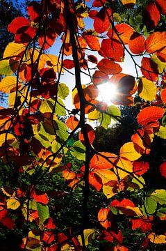 Herbst sur Iwona Sdunek alias ANOWI