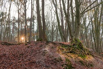 Waterig zonnetje in het bos