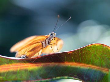 Gele vlinder tegen donkerblauwe achtergrond van Mariëtte Plat