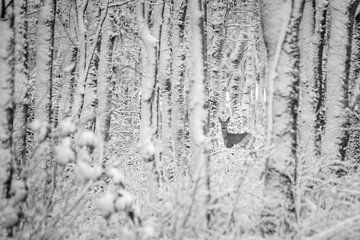 Hirsch im Winterwald (schwarz und weiß) von Martzen Fotografie