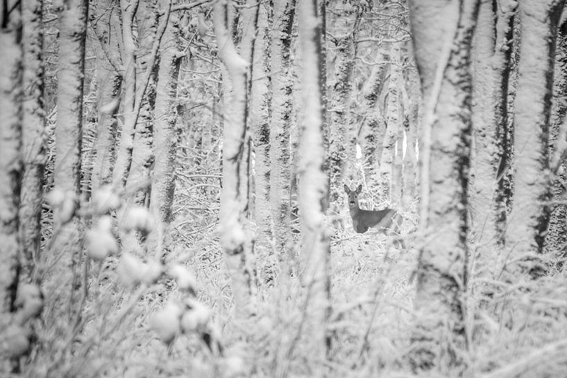 Ree in winters bos (zwart wit) van Martzen Fotografie