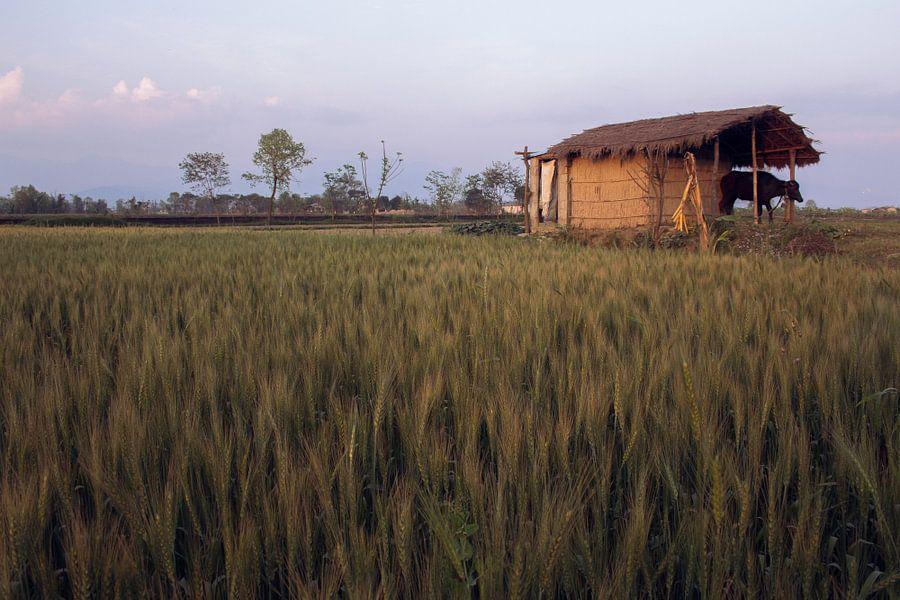 The nature of Nepal van Froukje Wilming