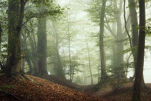 Dawn of Autumn.