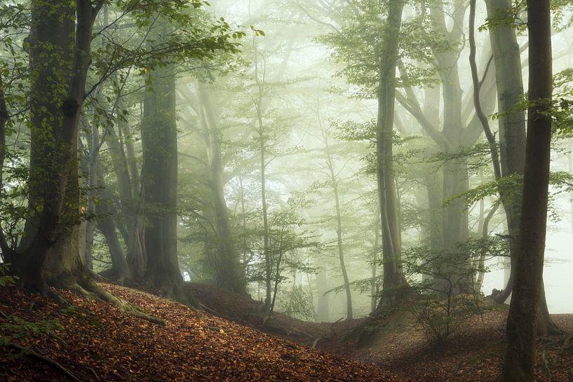 Dawn of Autumn. van Inge Bovens