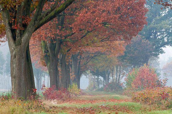 Herfstkleuren in het laantje met bomen