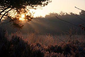 Zonlicht door de takken, zonnestralen sur J.A. van den Ende