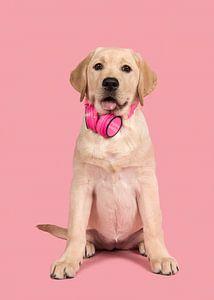 Puppy music