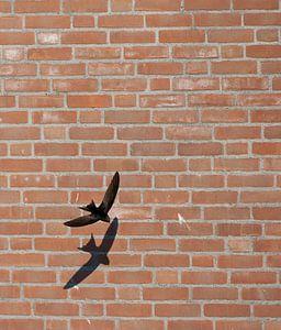 Gierzwaluw vliegend voor een huis in Katwijk aan zee van Beschermingswerk voor aan uw muur