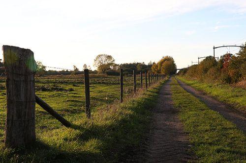 landweggetje tussen de weilanden