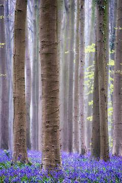 Nebligen Wald von Jeroen Linnenkamp