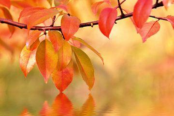 Herbstblätter sur