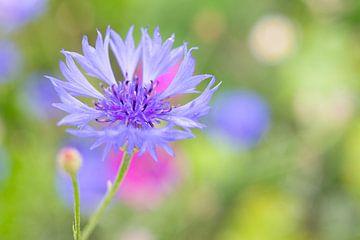 Wildblumen von Erwin Heuver