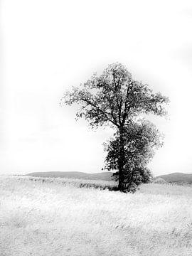 Einsamer Baum in den Wiesen schwarz und weiß von Monique Tekstra-van Lochem