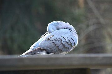 Taube auf einem Steintisch von Ton Kuijpers