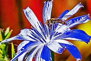 Zweefvlieg tussen de meeldraden van een bloem