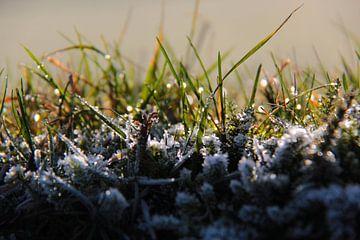Rijp op het gras von Ilona Bredewold