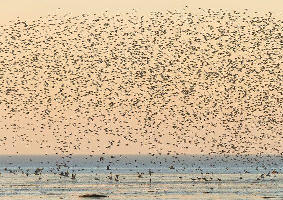 Een zwerm wulpen boven de Waddenzee van Karla Leeftink