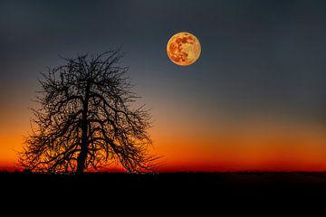 Der Großmond kurz nach Sonnenuntergang von Anita Martin