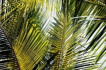 Palmbladeren van Maarten Borsje