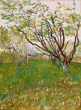 Blühender Obstgarten - Vincent van Gogh von