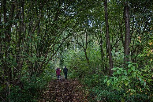 Promenade en forêt sur Guus Quaedvlieg