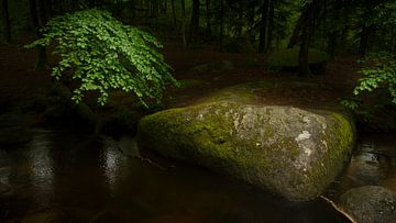 Bos met rotsblok van Gerard Notenboom