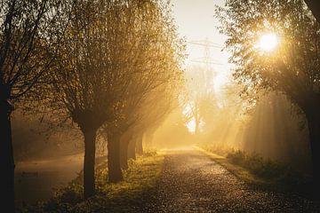 Het gouden pad van Amanda van den Berg / Fotografie Amanda