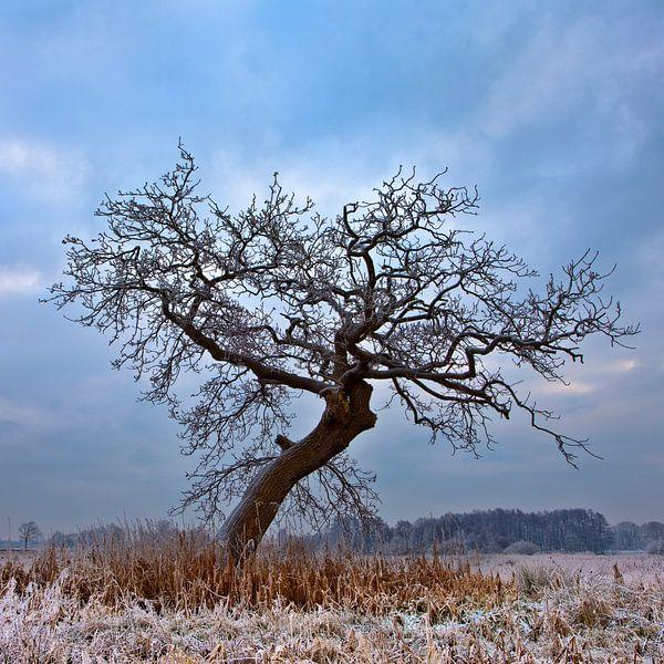 Boom in Winterlandscap Nederland Vierkant formaat van Peter Bolman