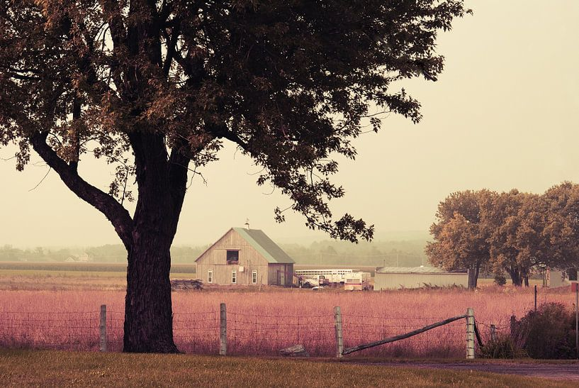 Rawdon's Country Life van Aimelle ML
