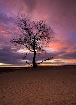 Der einsame Baum von Paul Begijn