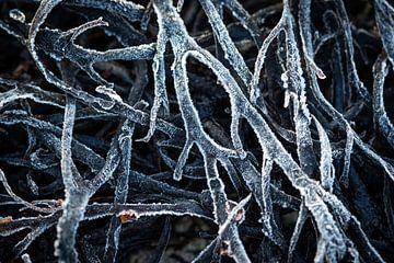 Bevroren zeewier van Edwin Mooijaart