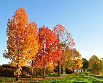 Autumn colors von Corinne Welp