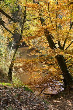 herfstbos in het luttezand bij de lutte van Compuinfoto .