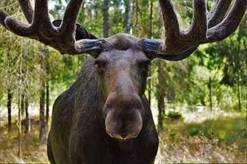 Der König der schwedischen Tierwelt von Naomi Elshoff