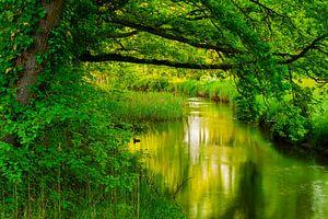 Groene rivier van Andrew George