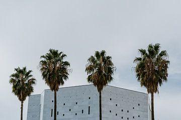 palmen van Huib Vintges