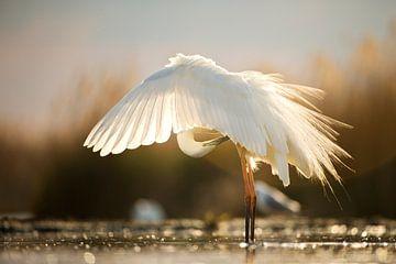 Great Egret by Bence Mate von Beschermingswerk voor aan uw muur