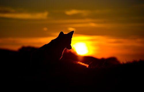 Sunset Fox van