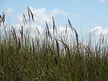 natuurgebied van Brigitte Koster