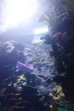 Unterwasser-Welt 3  von