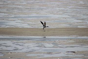 Vliegende eend van Priscilla Bakker