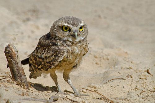 Holenuil in het zand