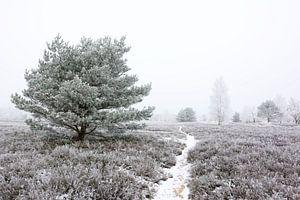 Frozen Heath