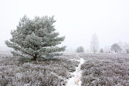 Frozen Heath van Gisela Scheffbuch