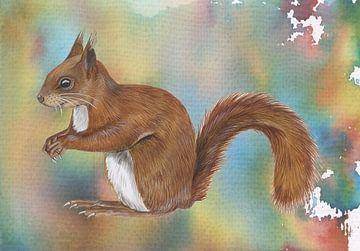 Eichhörnchen von Jasper de Ruiter