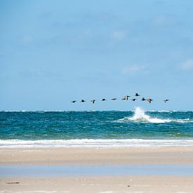 Strandvogels van Meint Brookman