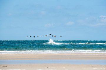 Strandvogels von Meint Brookman