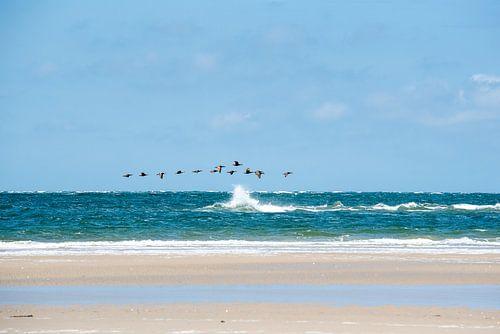 Strandvogels