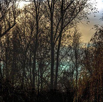 Grouster bos van Jakob Huizen van