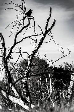Wo der Köder fliegt, sind Krähen. von Evita Pierik